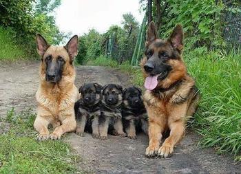 22 очаровательных семейных портрета животных