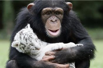 9 трогательных примеров дружбы животных