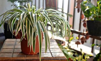Выбор комнатного растения — с чего начать