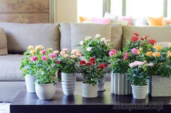 Выращивание роз из семян: шток-роза (мальва), китайская, каменная, крылья ангелов, полиантовая и другие популярные виды и сорта