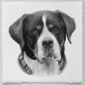 Гиперреалистичные портреты животных, нарисованные художницей Хелен Вайолет с помощью карандашей