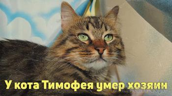 Красивый, ласковый кот Тимоша в добрые руки