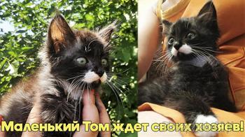 Красивый маленький котенок в добрые руки!