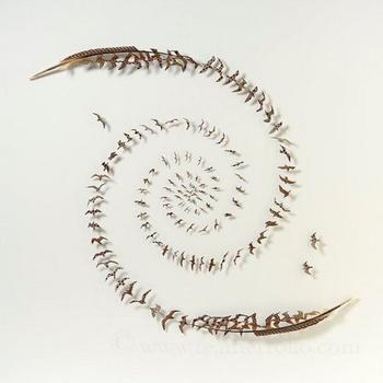 Произведения искусства из перьев от Криса Мейнарда