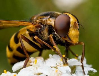 Необычные портреты насекомых в макросъемке