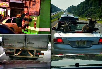 17 ситуаций на дороге, которые вызывают удивление и смех