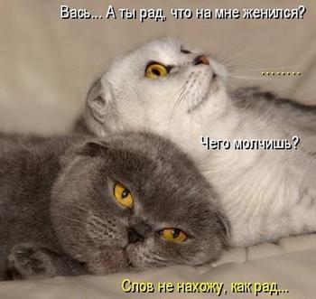 Смешные зверюшки: кошкоматрицы;))