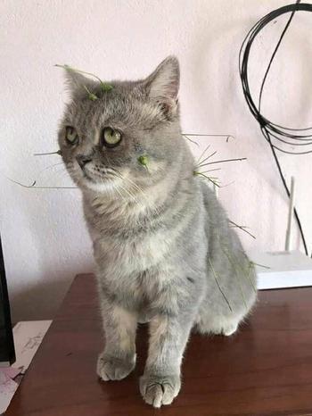 Коты, которые поднимут вам настроение