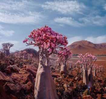Красота острова Сокотра через объектив Кристины Макеевой