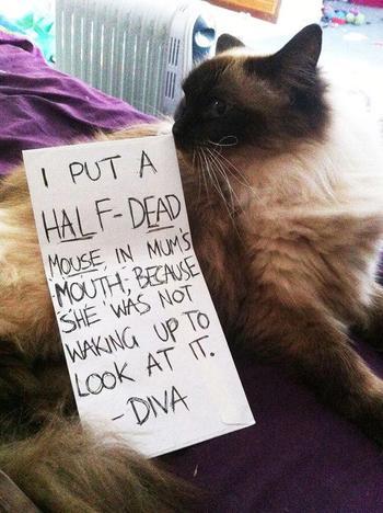 Смешные истории из жизни кошек-засранцев, за которые им должны быть стыдно