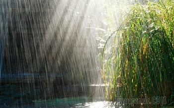 Дожди (Стих)