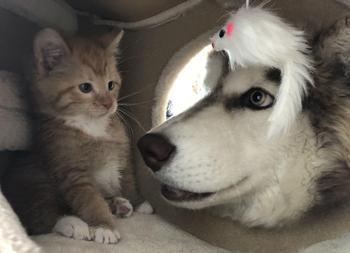 18 чудесных примеров милой дружбы разных животных