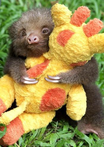 30 милейших детенышей животных, которые гарантированно заставят вас улыбнуться