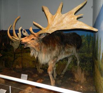 10 удивительных животных, которые, к сожалению, вымерли