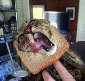 20 домашних животных в ломтиках хлеба, и это их смешная глютеновая маска