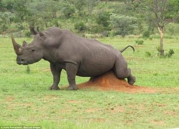Фото животных, которых смогли запечатлеть в самые неожиданные моменты