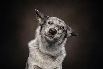 15 собак, которые состряпали смешные мордашки, когда услышали необычный звук