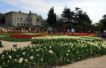 """Крым. Никитский ботанический сад. """"Парад тюльпанов"""""""