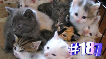 Смешные коты | Приколы с котами | Видео про котов | Котомания # 187 (видео)