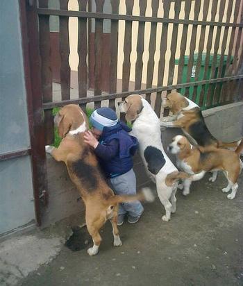 21 милое свидетельство того, что каждому ребенку нужна собака!