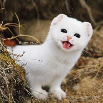 22 очаровательных котика-мутанта, созданных художником, а не природой