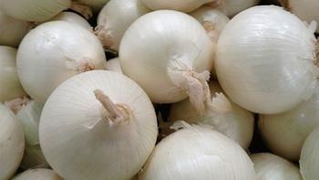 Белый лук: сорта, польза и вред, выращивание