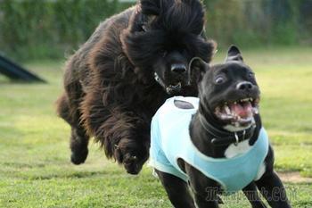 Уморительные собаки, чей нелепый вид рассмешит вас до слёз