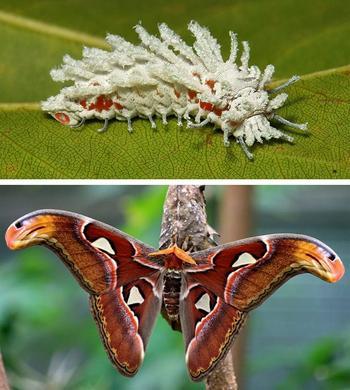 Из гусеницы в бабочку: магия природы