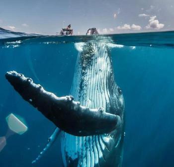 20 захватывающих фотографий с конкурса National Geographic Travel Photo Contest 2019