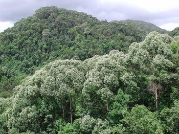 Самые грандиозные леса мира