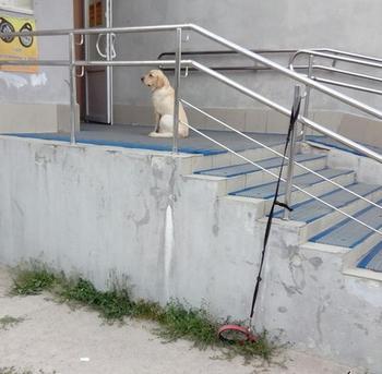 15 собак, которые покорят вас своими непосредственными выходками