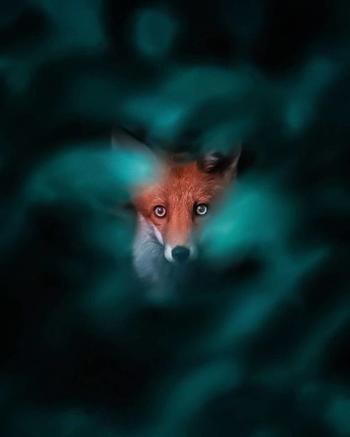 Парень снимает очаровательных лис, и кажется, они совсем не боятся его