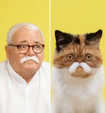 Хозяева и их кошки, которые очень похожи друг на друга