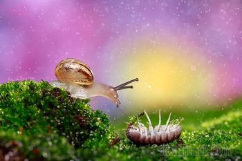 Гламурные букашки: фото