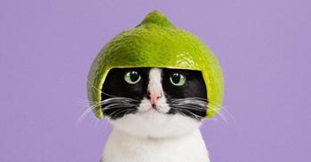 Принцесса Чито: творческая жизнь самой обыкновенной кошки