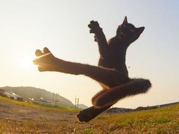 Японский фотограф посвятил свою жизнь съемкам кошек-«ниндзя»