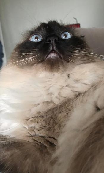19 котиков, которым стоило бы сходить на сеанс к кошачьему психотерапевту