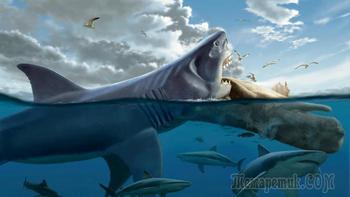 10 самых больших акул в мире