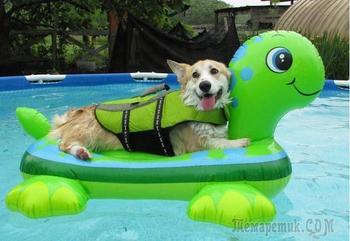 20 собак, которые безумно счастливы на своем месте