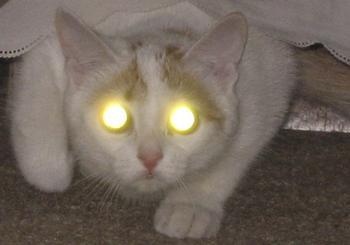Почему у кошки глаза светятся в темноте - в них маленькие прожекторы?