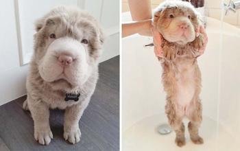 Мокрой псины пост: смешные собаки до и после купания
