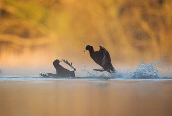 Победители «птичьего» конкурса Bird Photographer of the Year 2017