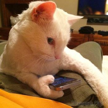 Фото котов, которые с трудом поддаются логическому объяснению