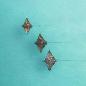 32 фотографии, позволяющие окунуться в океанскую красоту