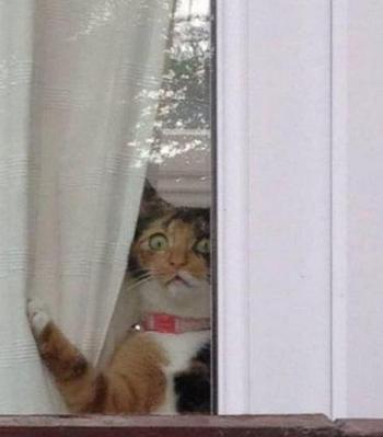 14 примеров того, как выглядит настоящее кошачье любопытство