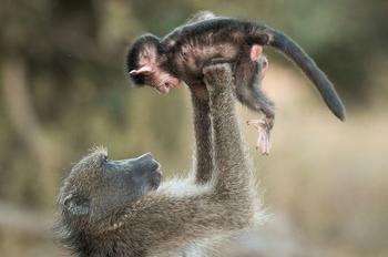 20 забавных доказательств, что люди являются прямыми родственниками обезьян
