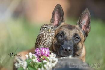 Невыносимо милые фотографии собаки Инго и её друзей сов, чья дружба растопит ваше сердце