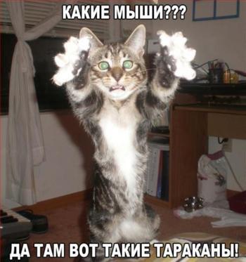 Самые смешные мэмчики из просторов сети о котах, котятах и кошечках