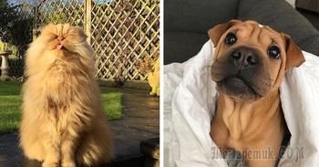 Фото кошек и собак, которые подарят вам немного доброты
