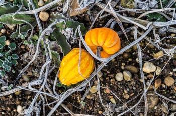 Первые осенние заморозки – чего нужно бояться дачнику